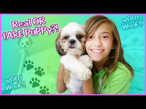 🐶 13 FUN AND WEIRD FACTS ABOUT MY PUPPY! 🐶  IT'S JUST JayJay!