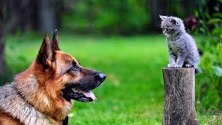 Заботливая, как мама. Видео про собак и кошек