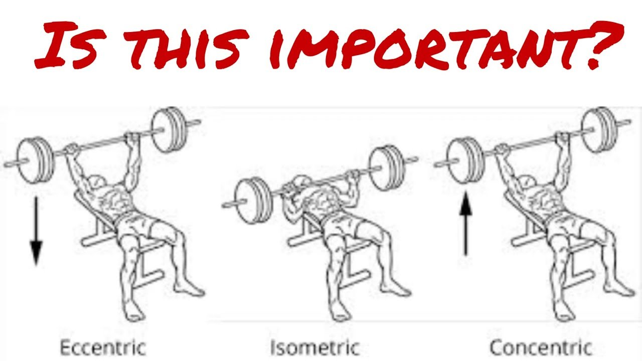How to use Eccentric, Concentric, Isometric Exercise - What that means -  Muscle Force Production