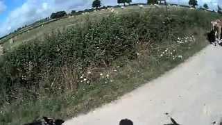 convoyage bétail avec chevaux et chien