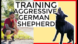 Aggressive German Shepherd tries to attack dog trainer- how to train aggressive dog