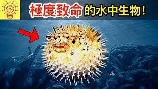10個世界上【極度致命的水中生物】!