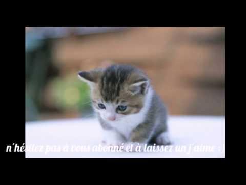 Le chaton le plus mignon au monde !