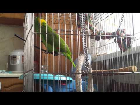 видео: Амазон Гриша Болтун