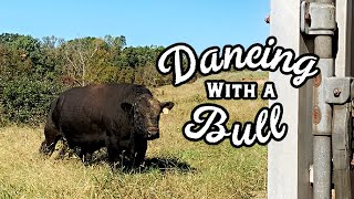 Slow Dancing With a Bull