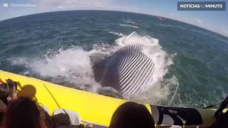 Baleia gigante quase come barco com turistas