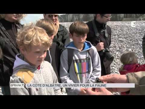 LE FEUILLETON : La côte d'Albâtre, un vivier pour la faune