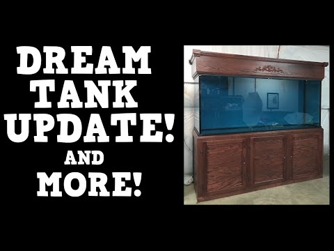 Dream Aquarium Update! Plus Updates On Other Stuff Too!! KGTropicals!!!