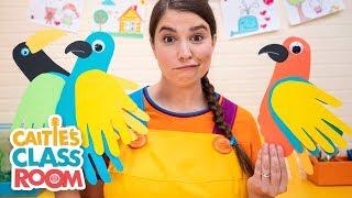 Caitie's Classroom LIVE - Birds!