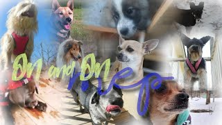 On & On  FULL DOG TRICKS MEP
