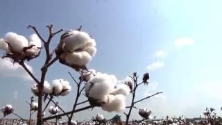 Why Louisiana Farms