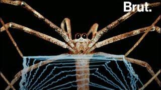 Comment les araignées tissent leur toile