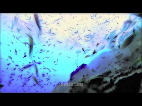 Pixies - Monkey Go To Heaven (subtitulada En Español)
