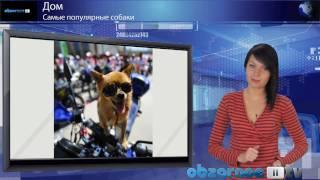 Самые популярные собаки