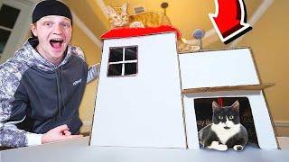 $5 CARDBOARD CAT MANSION DIY!