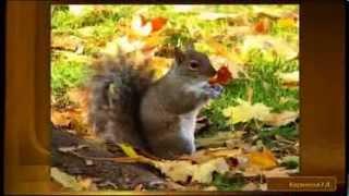 """Детская песня """"Осень"""" - минус с текстом на украинском языке."""