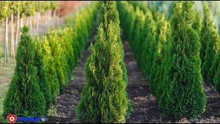 видео питомник ягодных растений
