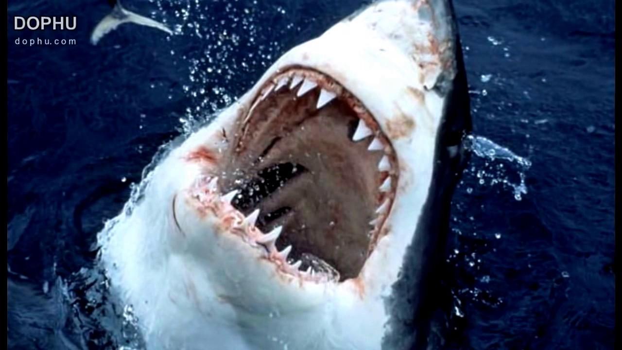 4300 Koleksi Gambar Ikan Hiu Di Perahu Gratis Terbaik