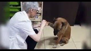 ★ В Турции на камеру видеонаблюдения попал собака. Она сама пришла в аптеку, чтобы полечить лапу.