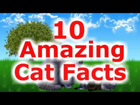 10 Amazing Facts about Cats