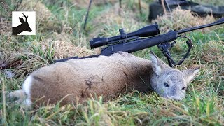 Morning stalk after roe deer - Polne sarny i poranny podchód