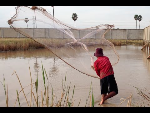 Net fishing by khmer people at countryside in cambodia for How to catch a fish