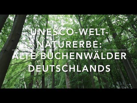 Alte Buchenwälder – UNESCO Welterbe