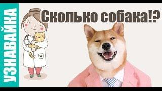 Сколько собака ходит беременная, спит и пьет. Узнавайка.