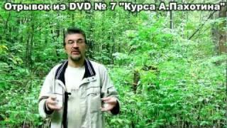 дни недели по-английски от Пахотина DVD 7