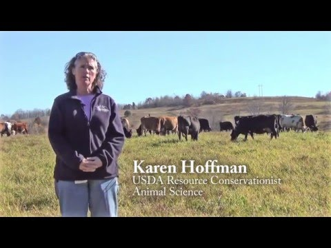 Grass Fed Dairy: Nutritional Differences