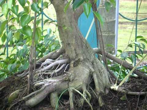 Vườn sanh kiểng Sáu Phùng - Phùng Garden (P1)