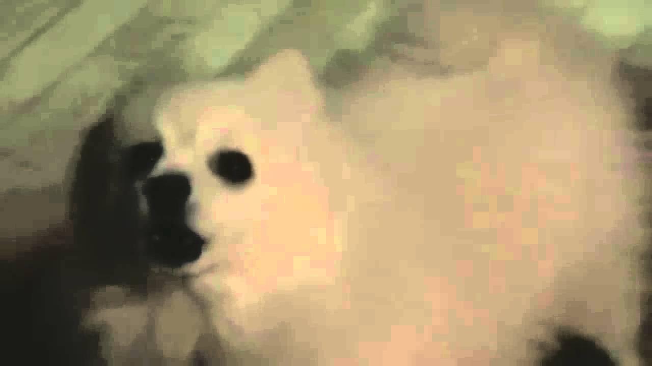 Dog With Annoying Bark