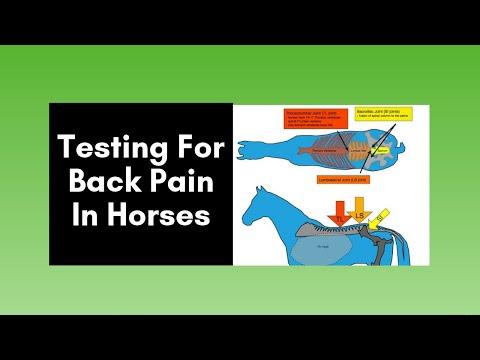 hqdefault - Equine Back Pain Symptoms