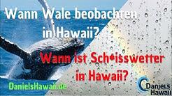Inselhopping in Hawaii, Wale beobachten im Hawaii Urlaub - Wetter & beste Reisezeit