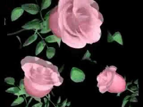 flower animation   Video Background    Free Download HD thumbnail