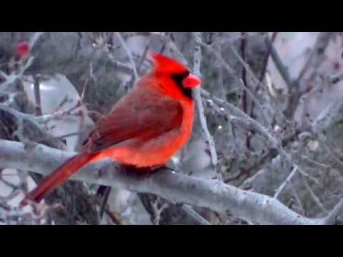 Audubon Society MidWest USA FULL MOVIE 2014 IN HD