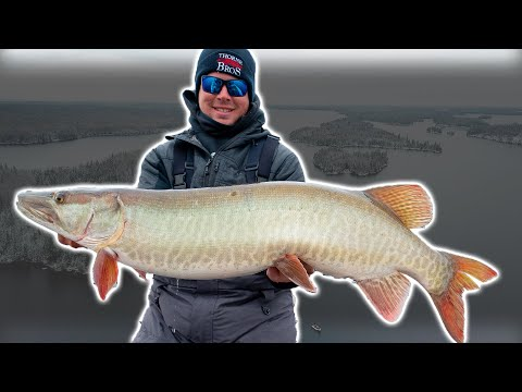 I STOLE HIS FISH (Freezing Cold Musky Fishing)