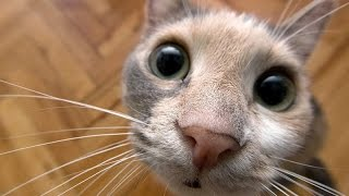 Pets with unusual sounds - Funny cat & dog video thumbnail