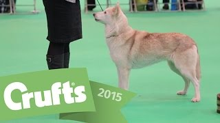 Best Of Breed Winner - Siberian Husky | Crufts 2015