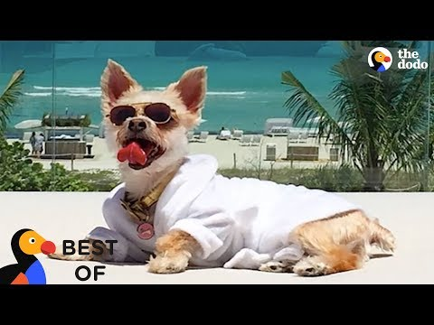 Most Spoiled Animals Living The Good Life Compilation | The Dodo Best Of