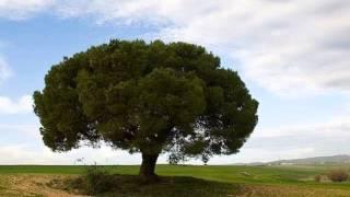 ne3ma chajra السيدة نعمة الشجرة