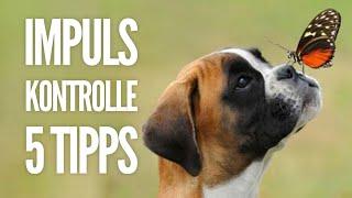 Impulskontrolle | 5 Alltagstipps für deinen Hund | Hundeerziehung by Vitomalia