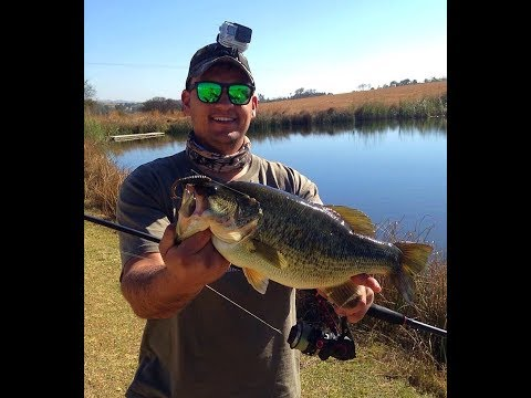 Bass Fishing Johannesburg Pond South Africa