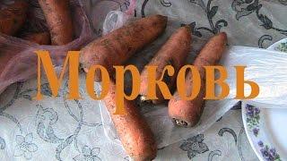 Морковь - Завтрак (СЫРОМОНОЕДЕНИЕ)