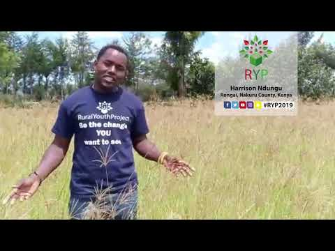 Harrison Ndungu - Rongai, Nakunu County, Kenya