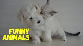 ||funny animals||funny animals videos||funny animals fails||funny animals compilation||cute pets||