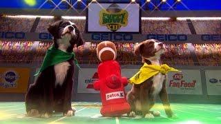 Puppy Bowl XIII Sneak Peek