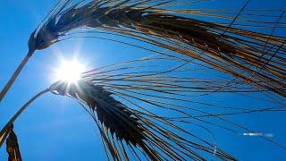 Hitzewelle: Die besten Tipps für die heißen Tage