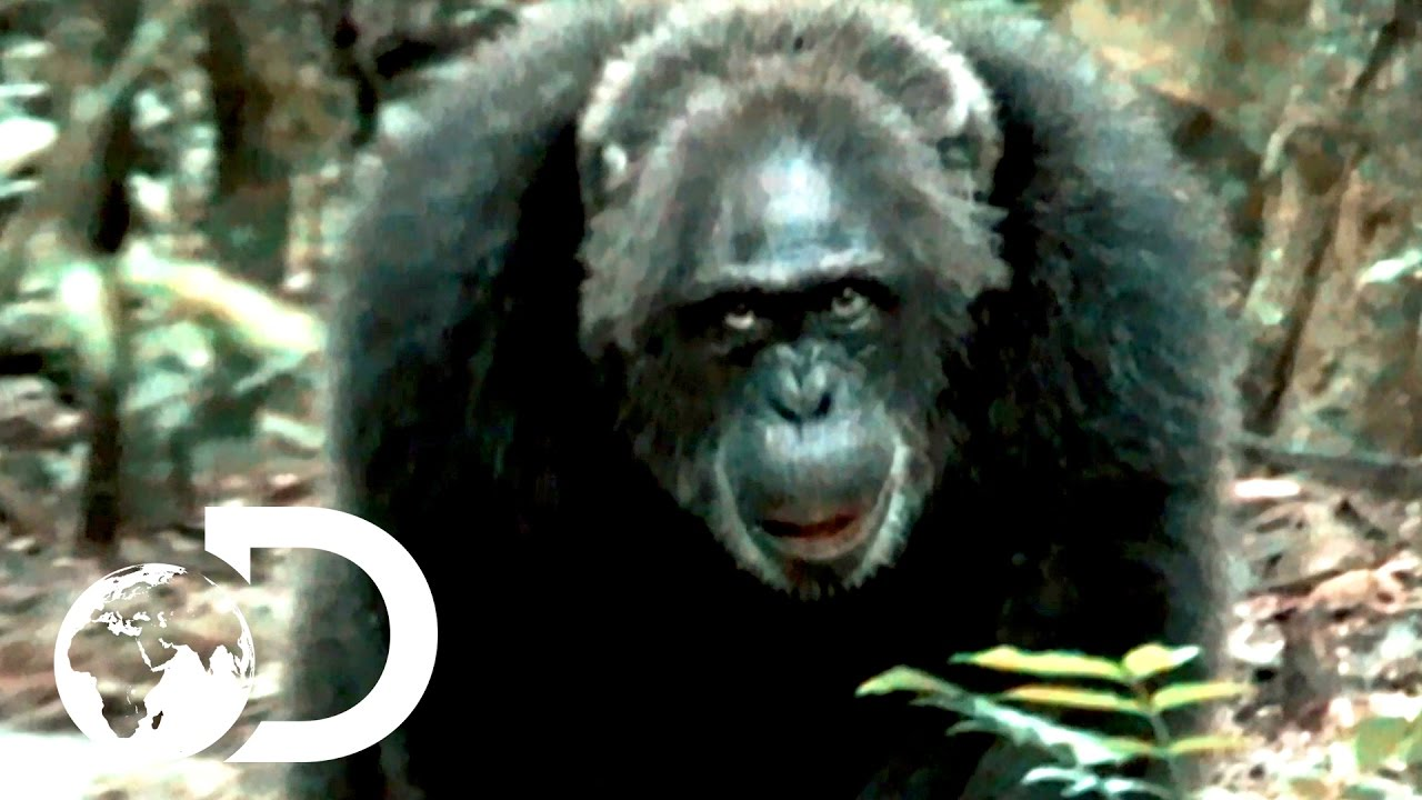rise of the warrior apes watch free