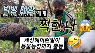 나!!! BIGBANG  TAEYANG 빅뱅 태양 한테 찍혔다 ^^;; 만난 썰 공작새 도도와 강아지 쁘미 …